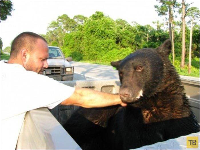 Мужчина спас тонущего в море медведя (16 фото)