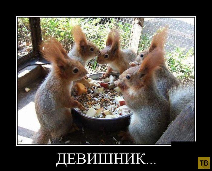 Подборка демотиваторов 12. 08. 2014 (30 фото)