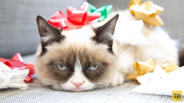 Топ 5: Любопытные факты о кошках, которые вы, возможно, не знали (6 фото)