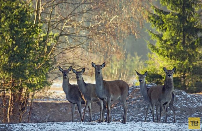 Национальный парк Гауя — самый живописный и большой национальный парк в Латвии (11 фото)