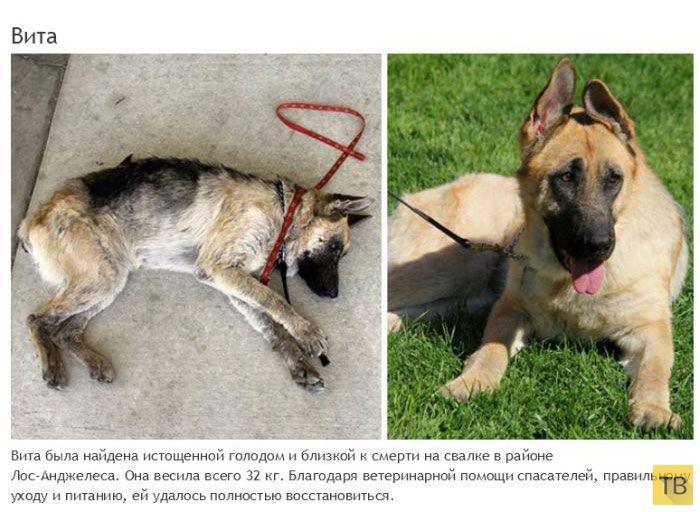 Спасение несчастных животных от гибели - достойно уважения (22 фото)