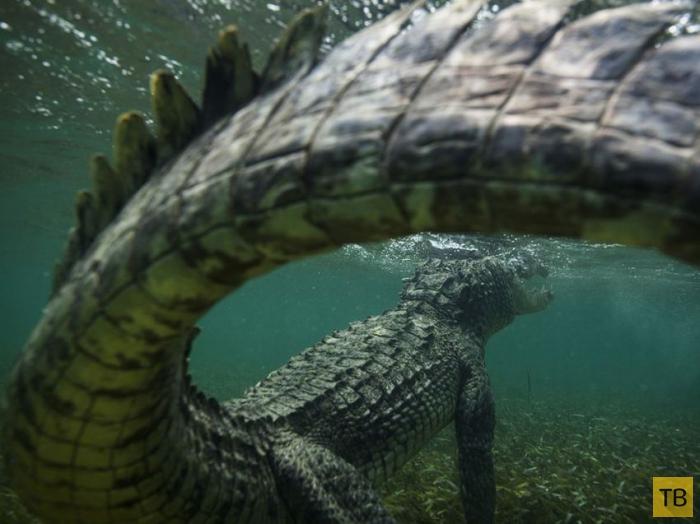 Очередная подборка лучших фотографии National Geographic за август 2014 года (14 фото)