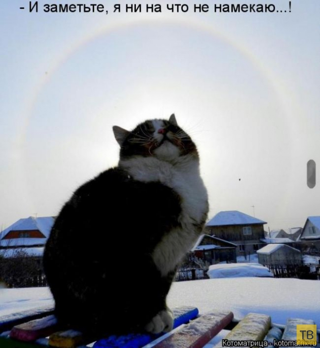 Лучшие котоматрицы недели, часть 12 (50 фото)