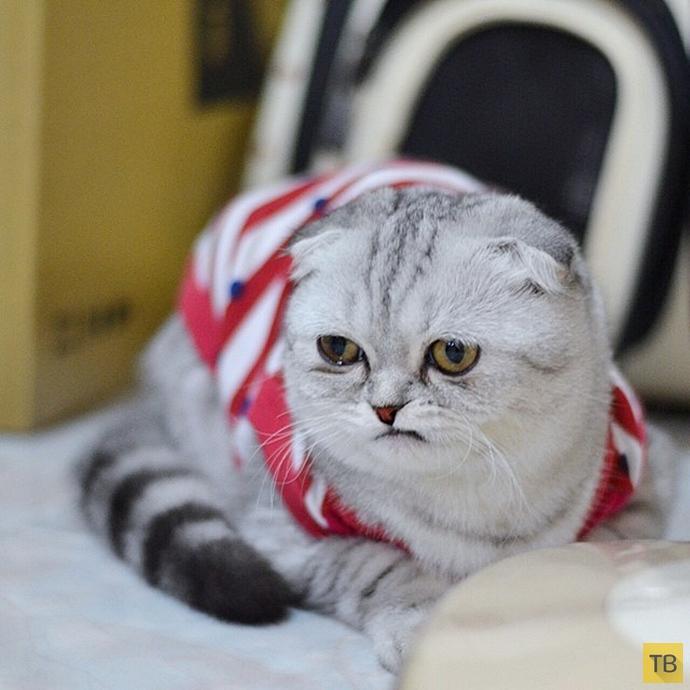 Самая грустная кошка в мире: Малышка Пи (16 фото)