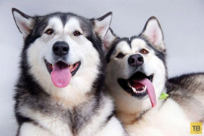 Интересные факты о собаках (10 фото)