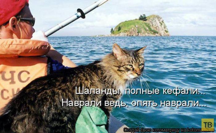Лучшие котоматрицы недели, часть 13 (51 фото)