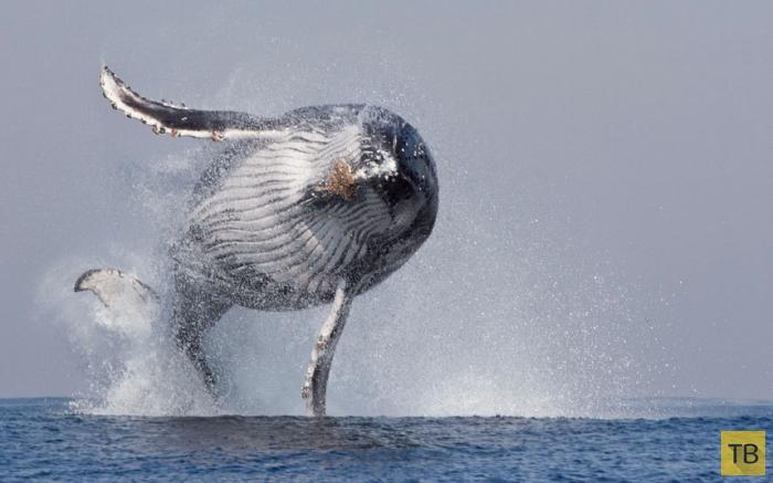 Забавные и необычные фотографии животных за неделю (16 фото)