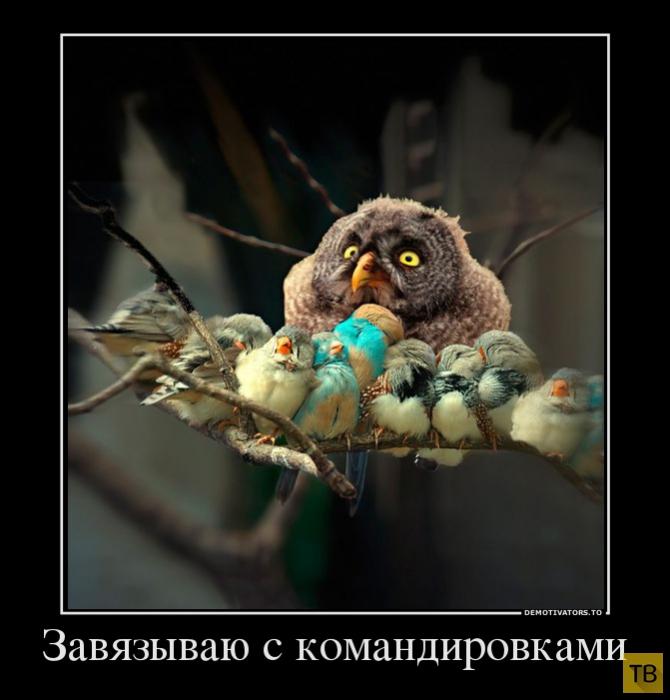 Подборка демотиваторов 14. 10. 2014 (31 фото)