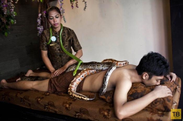 Рефлексотерапия: массаж питоном (10 фото)