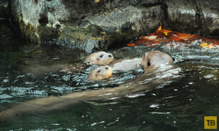 Редчайшие детеныши животных сингапурского зоопарка (18 фото)