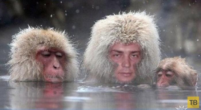 Русские боги фотошопа (10 фото)