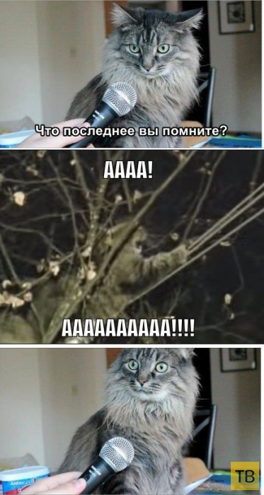 Фотожабы про спасение кота Барсика (26 фото)