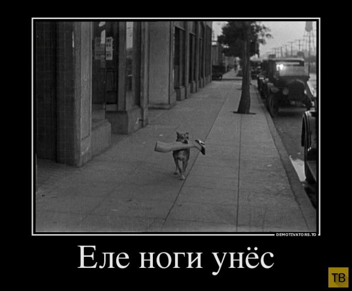 Подборка демотиваторов 17. 10. 2014 (33 фото)