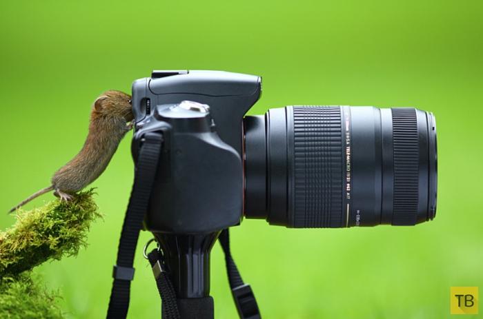 Фотографии животных за неделю, часть 2 (15 фото)