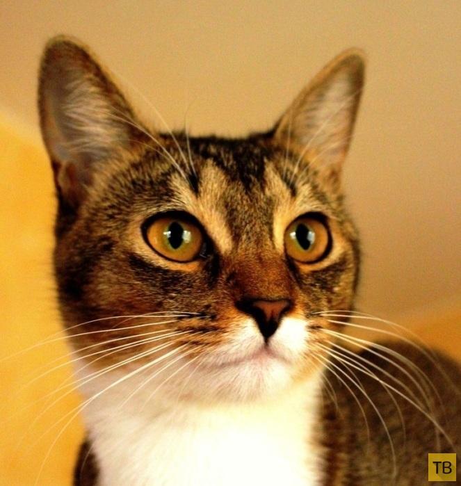 Тайный язык кошек (9 фото)