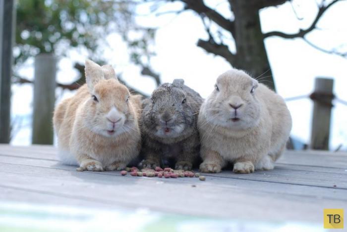 Животные тоже умеют дружить (20 фото)