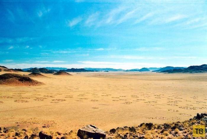 Странные круги на пастбищах Южной Африки (11 фото)