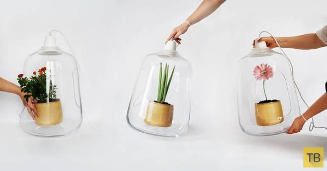 Гениальные лампы для комнатных растений (6 фото)