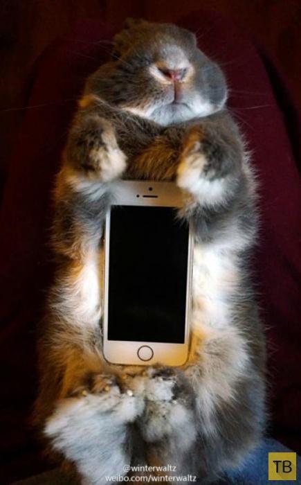 Японцы используют кроликов, как чехол для смартфона (8 фото)