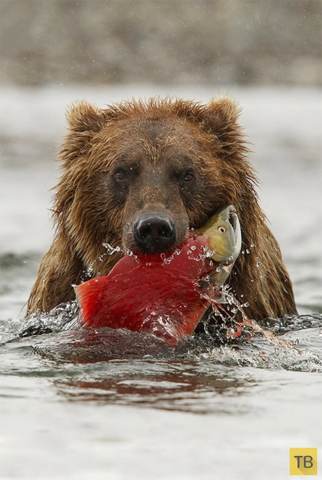 Восхитительная дикая природа в фотографиях с конкурса «Wilderness Forever» (31 фото)