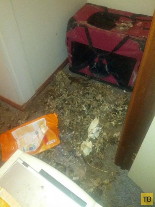 Квартира, после проживания дамы с котиком (12 фото)