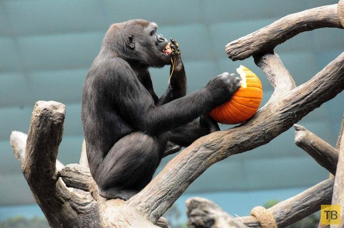 Хеллоуин у животных (23 фото)