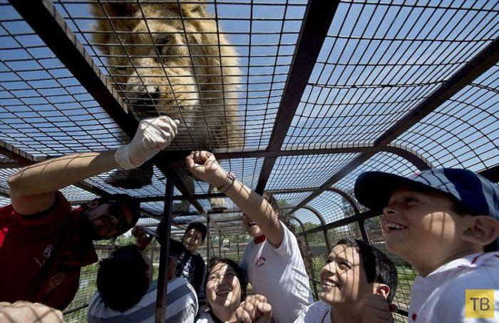 Чилийский зоопарк, в котором все наоборот (14 фото)