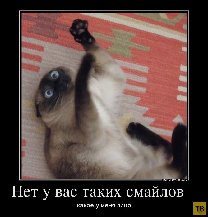 Подборка демотиваторов 06. 11. 2014 (30 фото)