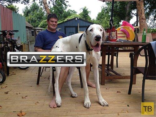 Как логотип Brazzers может опошлить обычные фотографии (17 фото)