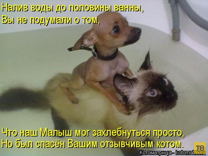Лучшие котоматрицы недели, часть 15 (50 фото)