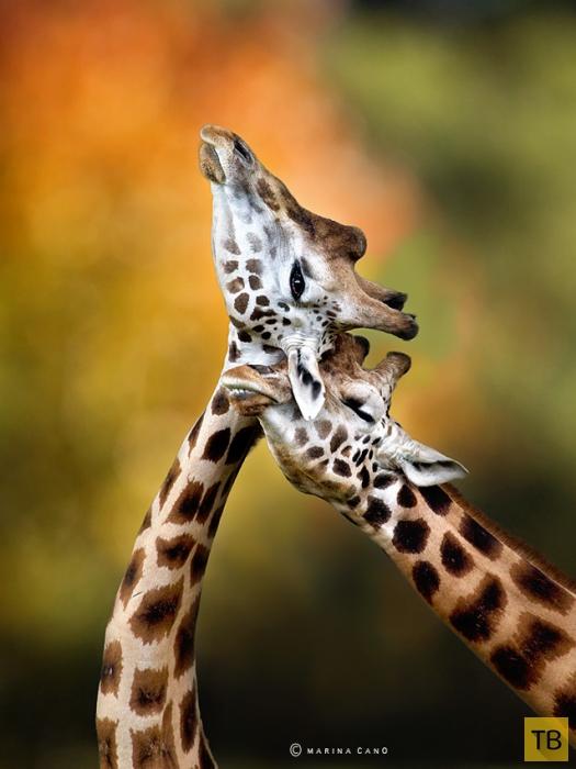 Милые и забавные животные (15 фото)