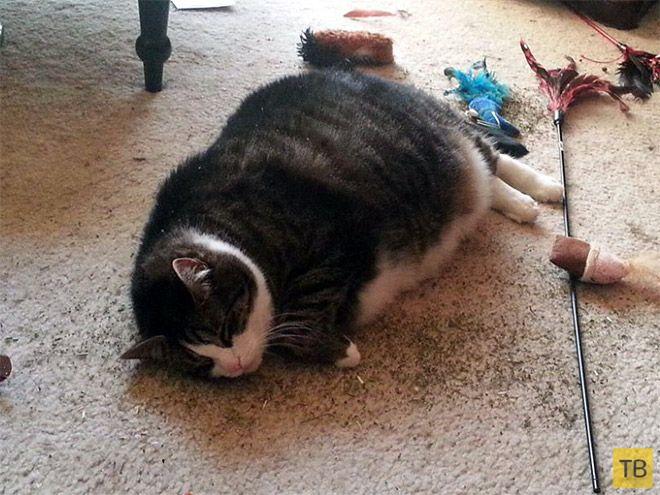 От кошачьей мяты вштыривает не по-детски (17 фото)