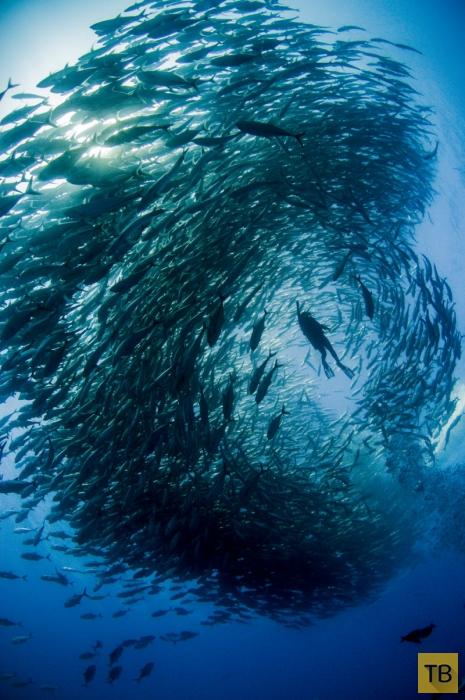 Торнадо из рыбы (16 фото)
