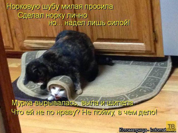 Лучшие котоматрицы недели, часть 17 (50 фото)