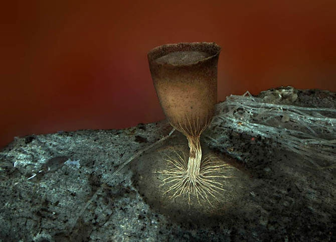 Необычные Снимки под микроскопом
