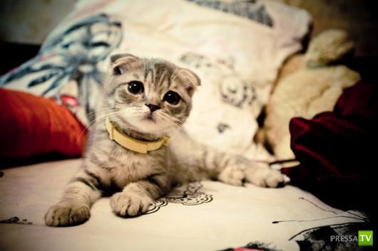 Подборка очень милых животных (48 фото)