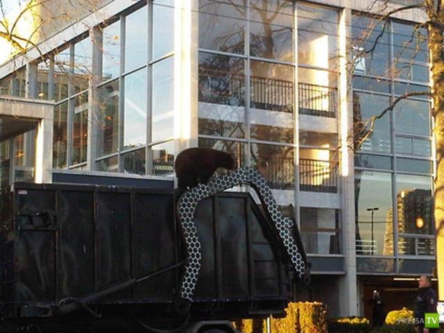 Медведь осматривает достопримечательности Ванкувера (14 фото)