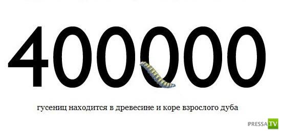 Факты в цифрах (10 фото)