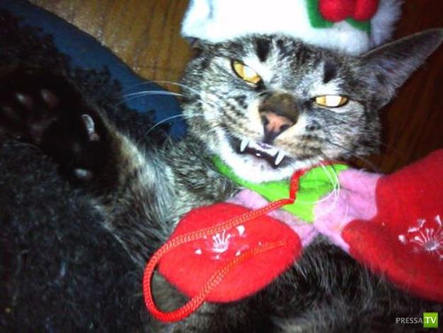 Новогодние кошки (22 фото)