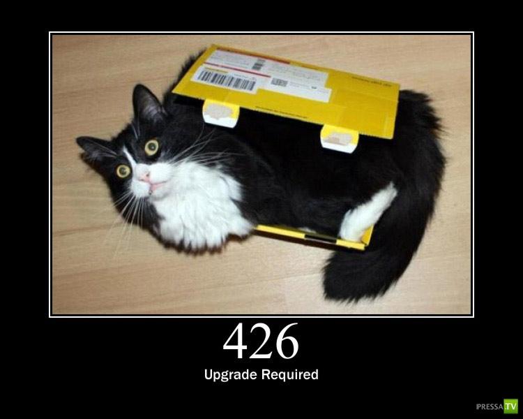 Компьютерные ошибки в Кошках :) (16 фото)