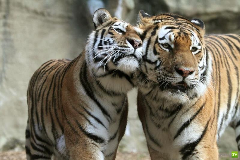 Эти забавные и милые животные (45 фото)