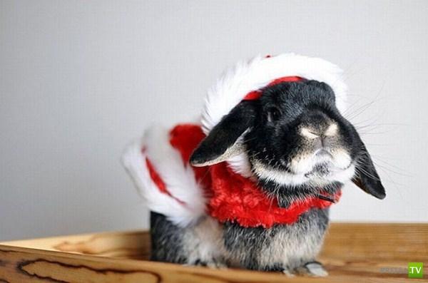 Животные тоже любят новый год (29 фото)