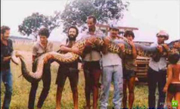 Крупнейшие змеи планеты (20 фото)
