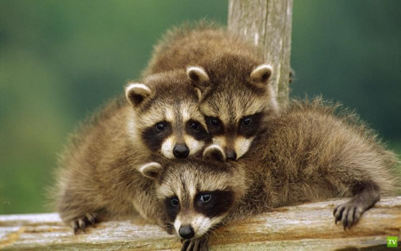 Подборка очень милых Животных (36 фото)
