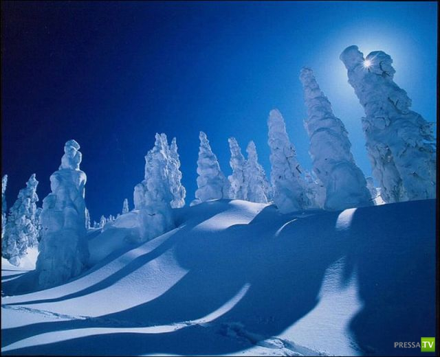 """""""Снежные Монстры"""" в Японии (16 фото)"""