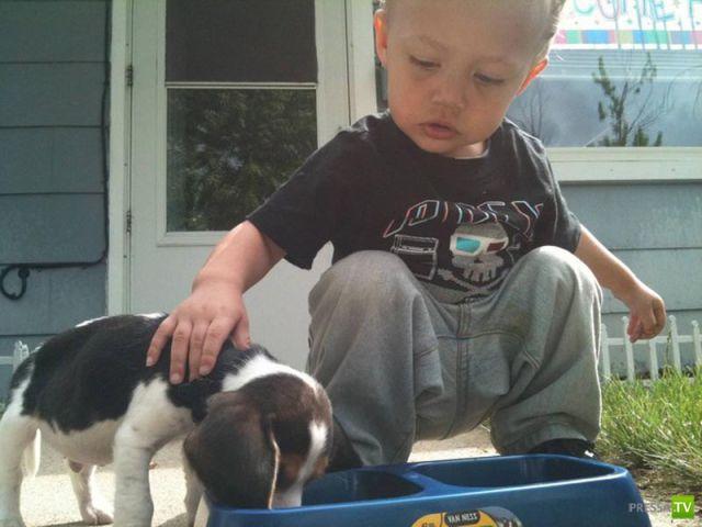 Мой первый щенок :) (2 фото)