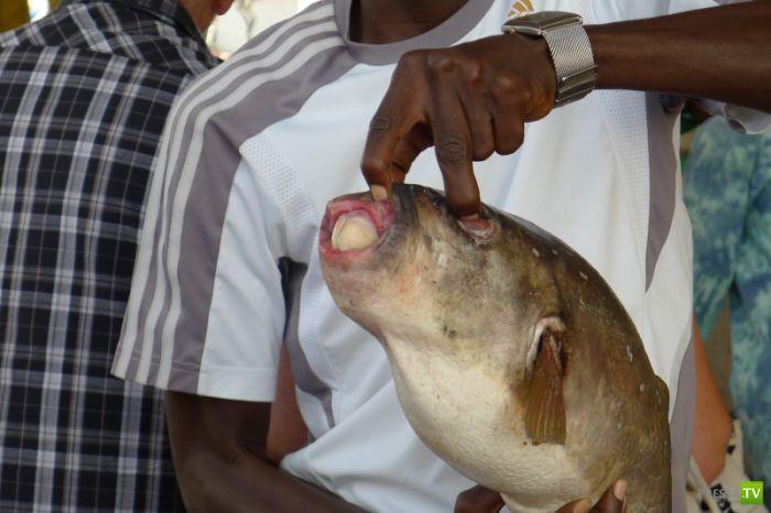 Рыба мутант (2 фото)