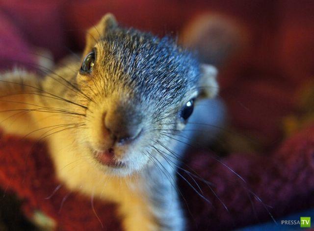 Эти забавные и милые животные Часть 4 (33 фото)