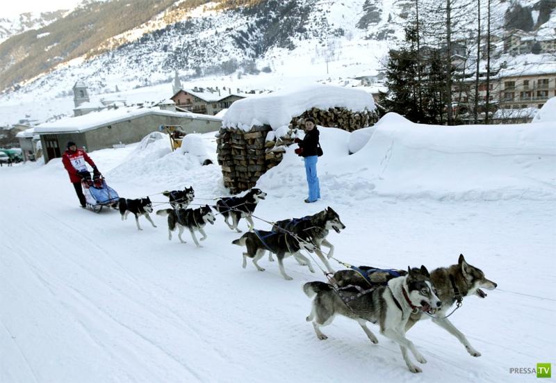 Сибирские хаски на La Grande Odyssee (10 фото)