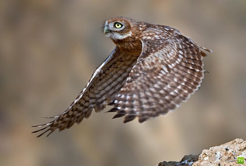 Красивые птички (46 фото)